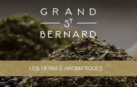 Grand ST Bernard